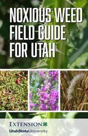 native utah plants noxious weed field guide for utah by utah state university