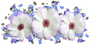 free flowers flowers white and blue free photo on pixabay