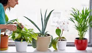 list of 5 beautiful houseplants for clean air balay ph