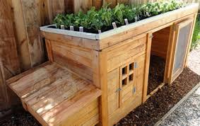 Backyard Chicken Coop Ideas Chicken Coop Ideas Pinterest Best Dirt Cheap Diys