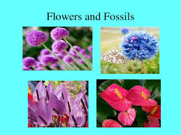 Wholesale Flowers Amaryllis Wholesale Flowers In East