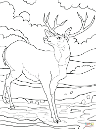 crayola coloring pages kids printable wild animal free baby farm