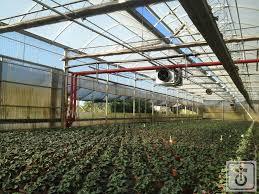 riscaldamento per capannoni impianto di riscaldamento a biomassa per serre gome