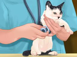 4 ways to take care of kittens wikihow