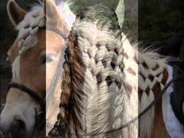 hairstyles for horses the most beautiful horse hair styles youtube