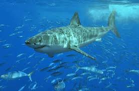 100 facts about sharks made from science