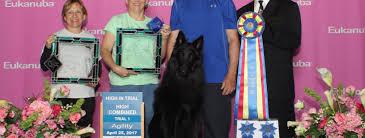 belgian sheepdog nationals colt u2013 rocks agility at nationals 1st working dog sweeps