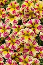 homelife 10 best plants for vertical gardens 3046 best garden delights images on pinterest gardens garden
