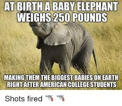 Elephant Meme - 25 best memes about baby elephant weigh baby elephant weigh memes
