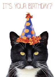 cat birthday cards alanarasbach com