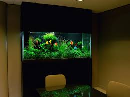 fish tank decor ideas fish tank ideas fish tanks