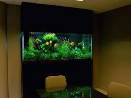 Home Aquarium Decorations Fish Tank Decor Ideas Fish Tank Ideas Pinterest Aquarium