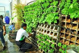 new urban garden for kasetsart university in thailand inhabitat