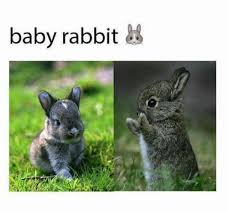 Funny Rabbit Memes - 25 best memes about baby rabbit baby rabbit memes