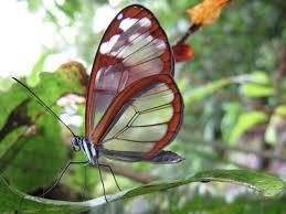 costa rica butterfly garden abwfct com