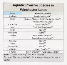 birch lake blog august 2015