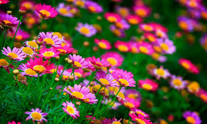 Summer Flowers by Free Summer Flowers Wallpaper High Quality Long Wallpapers