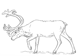 reindeer coloring pages free coloring pages