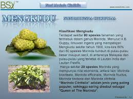 Teh Noni bsy enzyme noni bsy enzime noni 100 morinda citrifolia extract