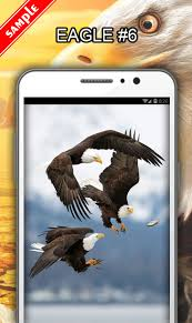 stellers sea eagle wallpapers eagle wallpapers android apps on google play