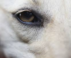 What Can Cause Blindness Eye Parasite That Can Cause Blindness In Dogs Is Making Headlines