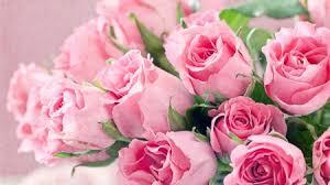 pink bouquet pink bouquet flowers nature background wallpapers on desktop