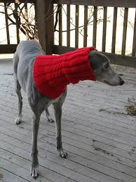 afghan hound snood erssie the hound snood gallery