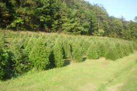 the 2015 area tree farm guide sponsored by swineford