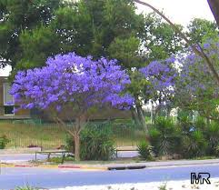 best 25 florida landscaping ideas on pinterest white