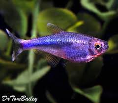 aquarium fish tropical fish and goldfish for sale
