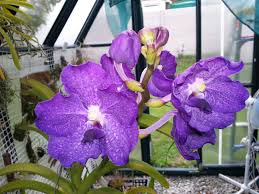 Orchids Facts by Orchids On A Balcony