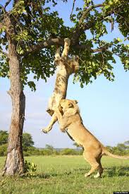 gets stuck in a tree before his helps him