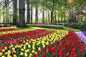 flower garden in amsterdam dutch tulip tour small group package holiday odyssey traveller