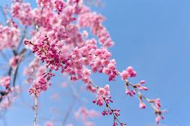 flora sky apk free free images landscape branch flower petal food