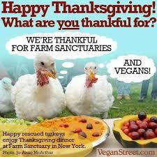 463 best vegan meme images on veganism animal rights