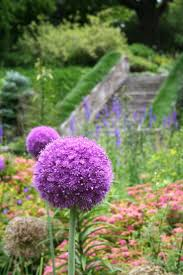 587 best purple flowers pictures images on pinterest beautiful