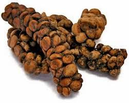 Luwak Coffee gourmet kopi luwak or civet coffee buy civet coffee beans product