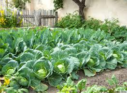 Front Yard Vegetable Garden Ideas Create Vegetable Garden In Your Front Yard
