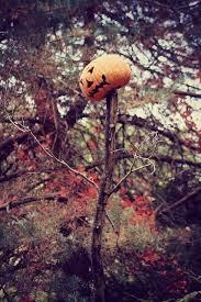 New York Botanical Garden Pumpkin Carving by Best 25 Nyc Botanical Gardens Ideas On Pinterest Botanical