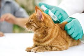 core vaccines for dogs and cats harris parkway animal hospital blog