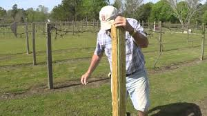 how to set up grape vines with paul johnson part 1 youtube