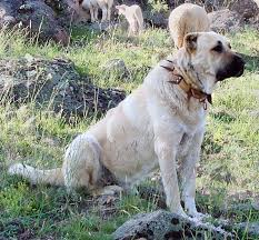 Names That Mean Comfort 50 Regal Names For Noble Female Guard Dogs Pethelpful