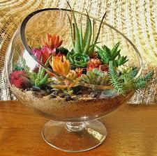 best 25 succulent terrarium ideas on pinterest terrarium