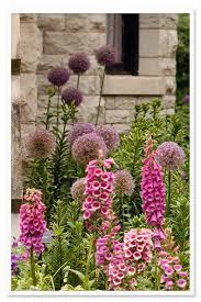 allium globemaster ornamental sugar creek gardens st