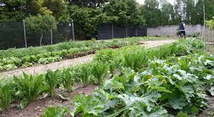 Vegetable Garden Restaurant by Cuisine U2013 Is Benas Country Lodge