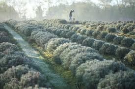 farm like a billionaire harvest tax breaks