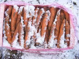 creance pour cuisine la carotte de créances merveille des sables régal