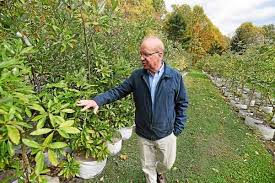 elverson marketing executive launches tree nursery