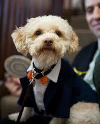 9 dapper dogs wearing bow ties at weddings martha stewart weddings