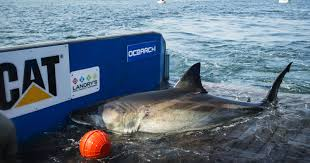 12 things you didn u0027t know about jaws long island pulse magazine
